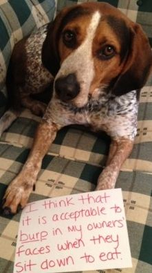 "dog shaming ~ ""I think it is acceptable to burp in my owners face when they sit down to eat."" ~ Dog Shaming shame"