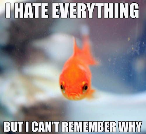 http://www.johnnybet.com/goldfish-slot-machine-online#picture$id=1799