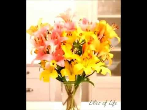 Celebrate the lily