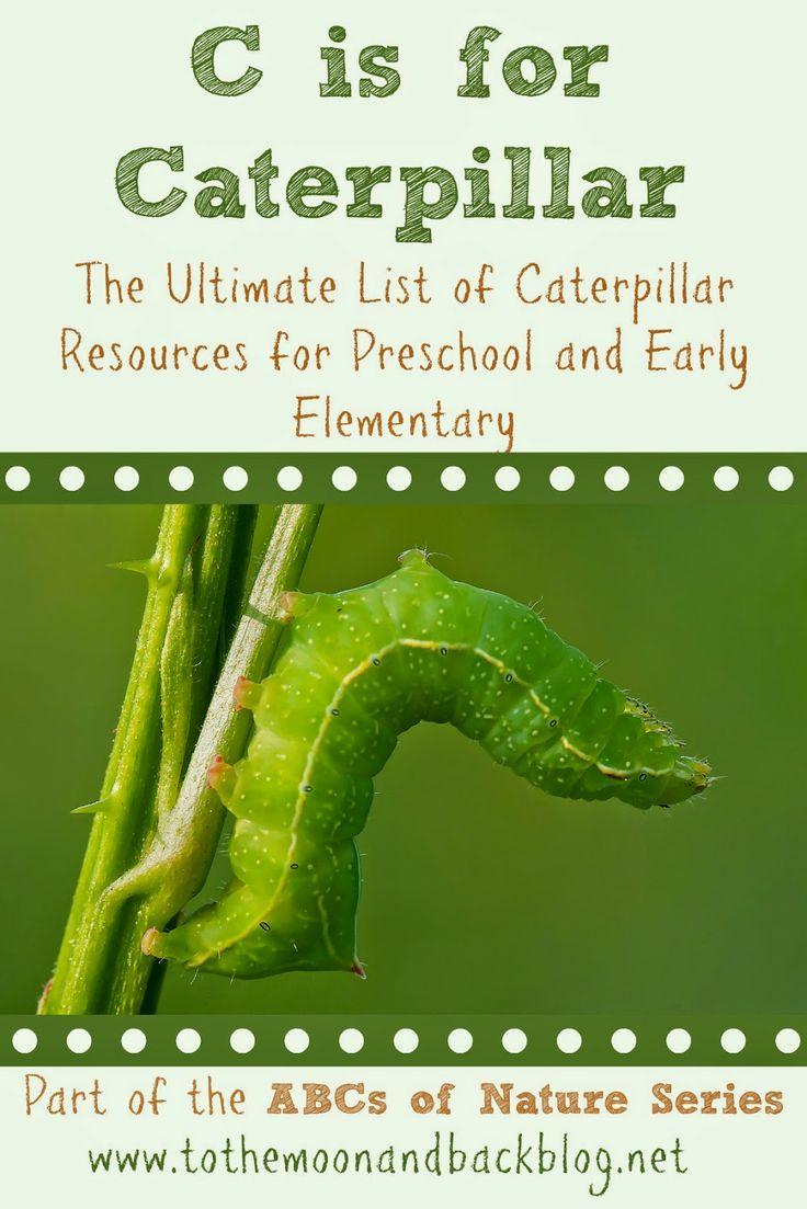 203 best caterpillar butterfly curriculum images on pinterest