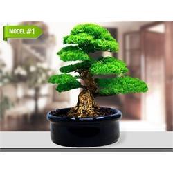 Bonsai tree- bonzai ağacınızı kendiniz yetiştirin. Harika ilginç hediyeler mağazamızda..