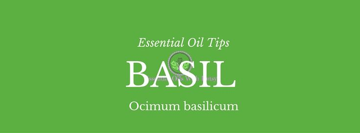 ABOUT BASIL ESSENTIAL OIL: Basil essential oil has a wonderful herbal aroma. It reminds me of that fresh smell when you accidentally crush herbs underfoot in the garden. Or am I the only clumsy one who does things like that?  I love to diffuse Basil, it is great to combine with Lemon in the … Continue reading Basil Essential Oil