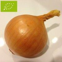 Oignon jaune Setton Bio - Amélioration de la variété Sturon avec une forme plus uniforme, des rendements plus élevés et un meilleur potentiel de stockage et de conservation.  Bonne qualité de la peau et excellente saveur prononcée.