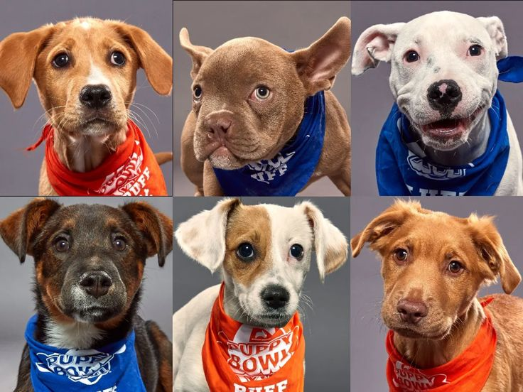 Puppy Bowl XVI photos Meet the rescue pups competing on