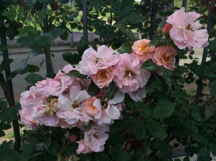 AESME Flowers & Fine Art | Roseto Comunale Rome