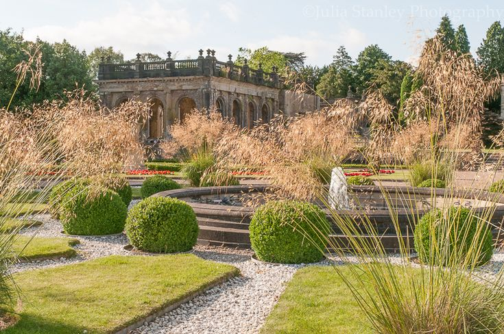 Stipia looking fabulous in the early evening sun at Trentham Gardens