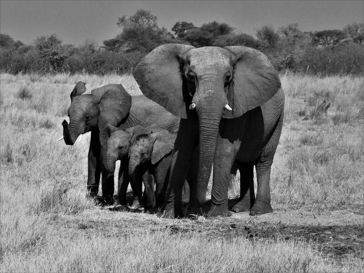 Mahango Game Reserve. Namibia