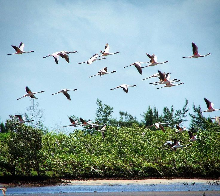 A flamingo flock started flying right in front of me... awesome