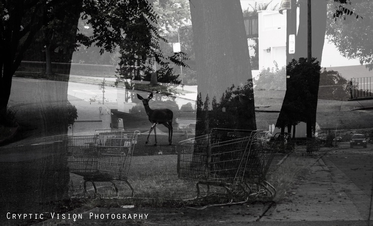 # Deer with Trolleys. By www.crypticvisionphotography.com