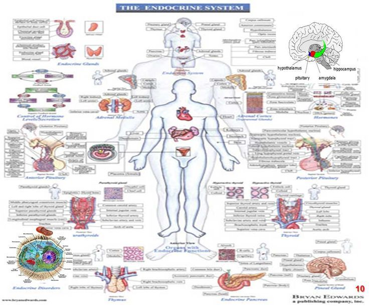 endocrine system (& vitamin D thing)