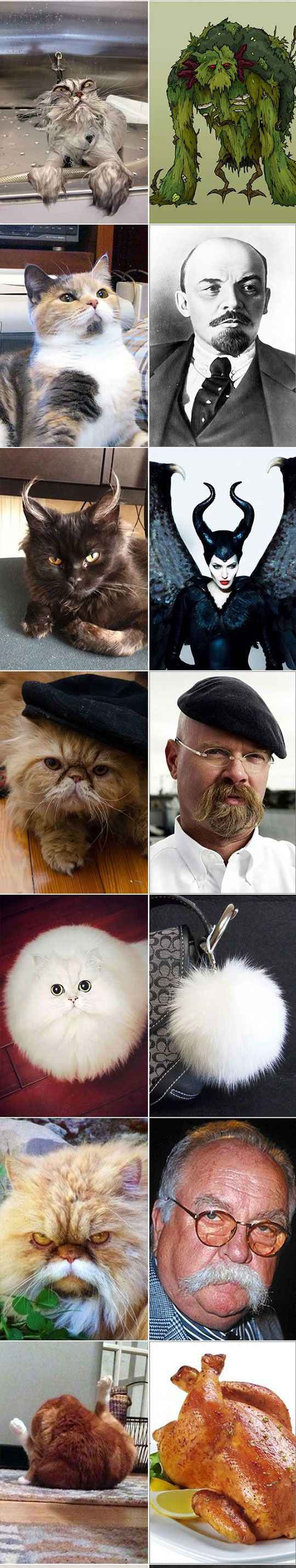 18 Cats That Look Like Something Else - Part 1
