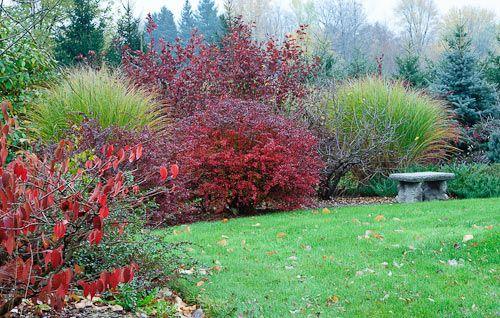 shrub borders