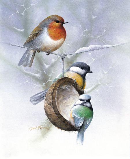 Pin by irina noskova on for Whole coconut bird feeders