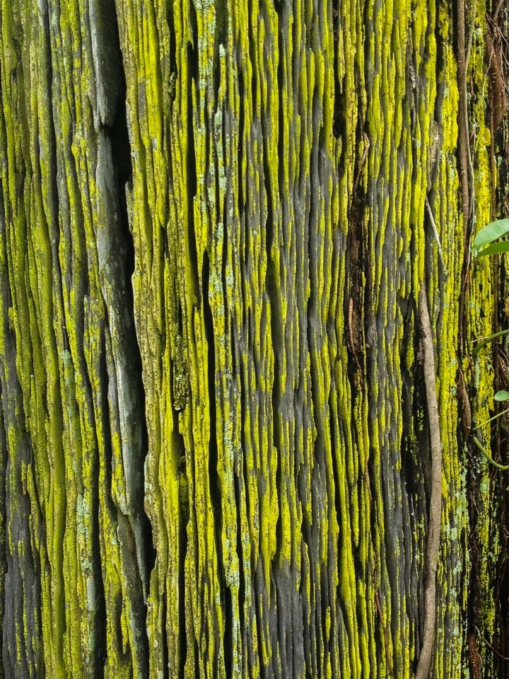 This is a photograph I took while on a recent trip to Malaysia... The tree had this amazing almost fluro like moss growing on it. I was mesmerized. Love the art in nature.