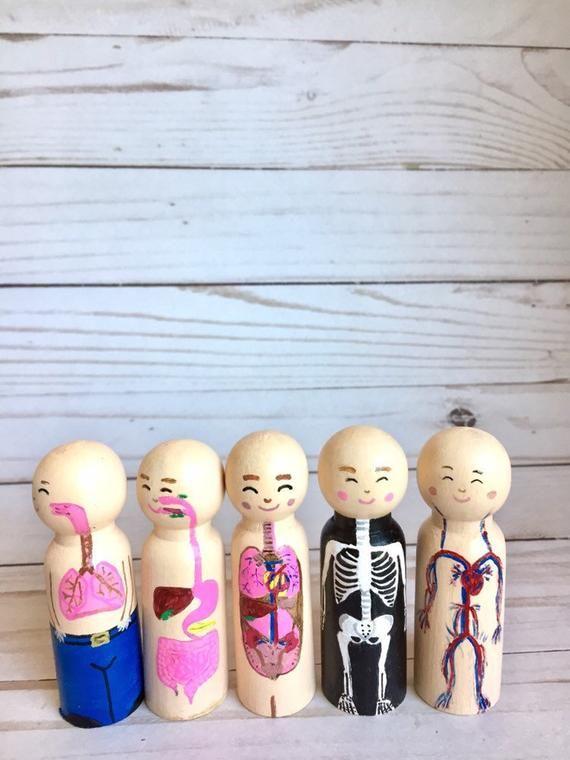 Anatomy Art, Peg Dolls, Dorm Decor, Doctor Gift ...
