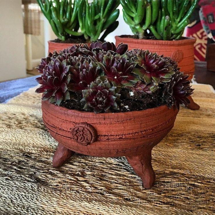 Sedum in terracotta pots. #pottery #ceramics #terracotta #pots #sedum #succulents by onebearceramics
