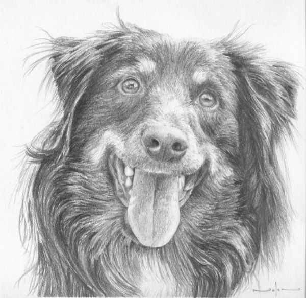 How to draw long hair dogs – 10 – Tongue