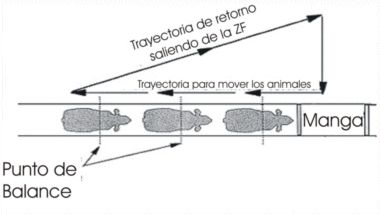 Principios de comportamiento animal para el manejo del rodeo bovino en el monte nativo entrerriano :: Tambo Argentino