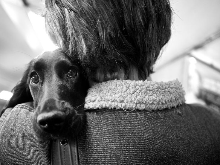 personally I don't need a reason but if you do read this  - 10 Reasons Why A Dog Can Make Your Life So Much Better - #adoptdogs #dogsneedhomes #dogsarethebest #dogs #adoptadog