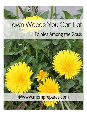 23 best Tackling Weeds images on Pinterest | Weed control ... | 300 x 400 jpeg 31kB
