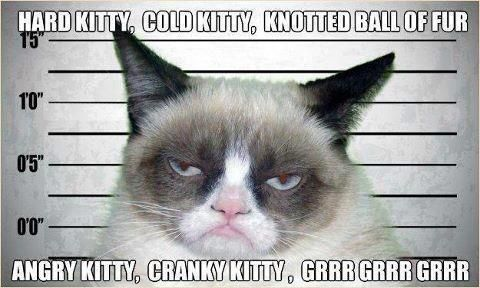 Grumpy Kitty song - this cat cracks me up... Hahaha! Gotta love