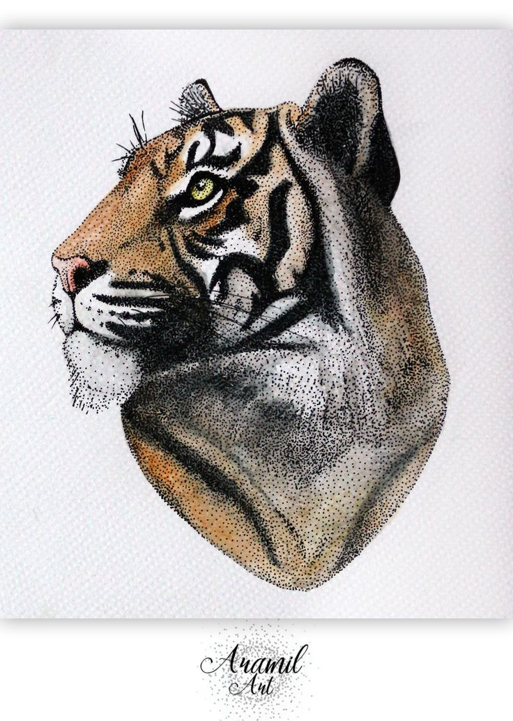 Tiger drawing, created by using about a thousand dots and colored with watercolour pencil. Art by Petra Jánosi. Come and check on FB. :)  https://www.facebook.com/aramilart