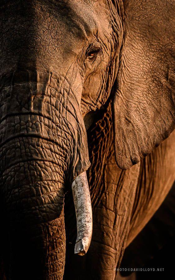 Recent Pictures   David Lloyd Wildlife Photography