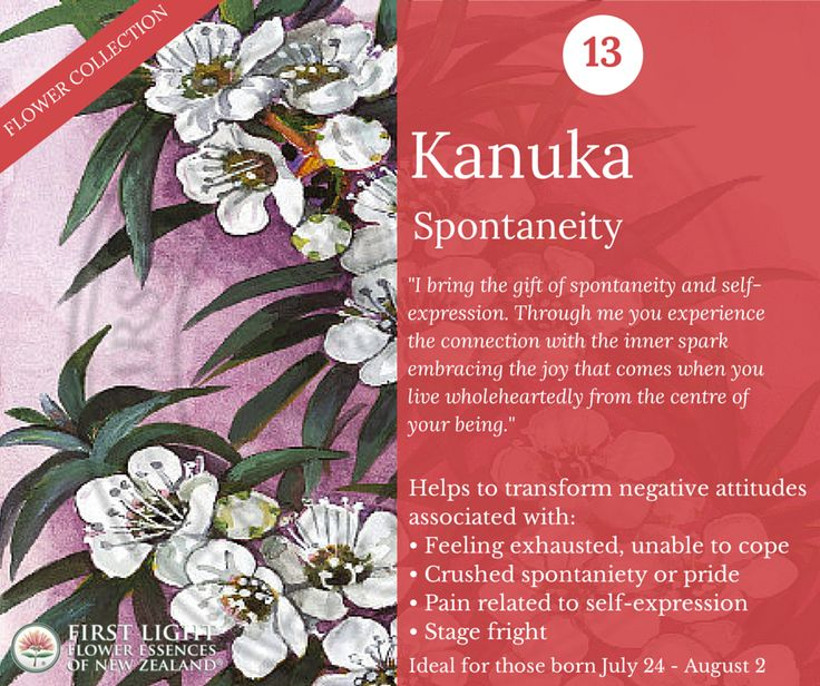 Kanuka - Spontaneity - ideal for performers, artists, musicians, presenters and those who want to be able to express themselves freely and spontaneously. Use when experiencing stage fright, creative block, rejection, anger or suffering around performance. Unafraid to shine and become the star that shines brightly in the theatre of life. Personal power flower for those born Jul 24 - Aug 2 (Leo)
