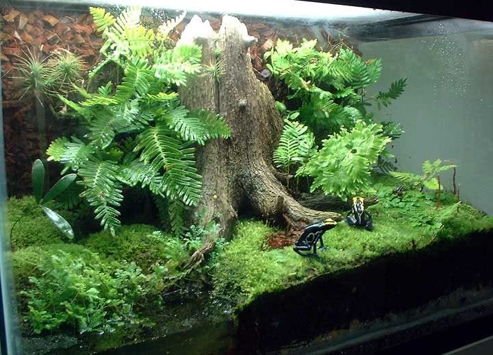 Dart Frog Vivarium With Stump, Ferns, And Moss.