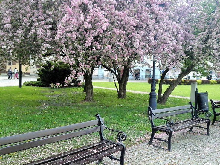 Spring in Wrocław