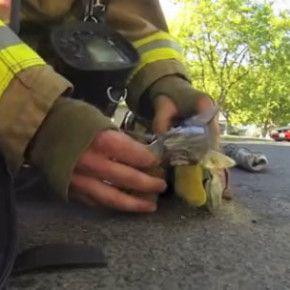 """Il video seguente è un finto trailer del finto film """"The rescue"""", che racconta il salvataggio e la successiva rianimazione di un gattino svenuto in mezzo al fumo di una casa nel nord-ovest di Fresno, in California. Questa, però, è una storia vera."""