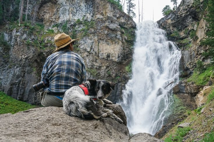 A diabetic alert dog is a good option for Type 1 Diabetics who like to get off the grid. // Don't let Type 1 diabetes hold you back. Learn everything you need to know about hiking with diabetes, including practical safety & first aid tips.