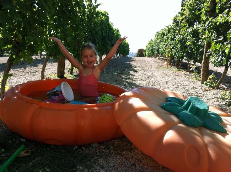 Una calabaza gigante en medio del #viñedo de #Contiempo... refrescante!