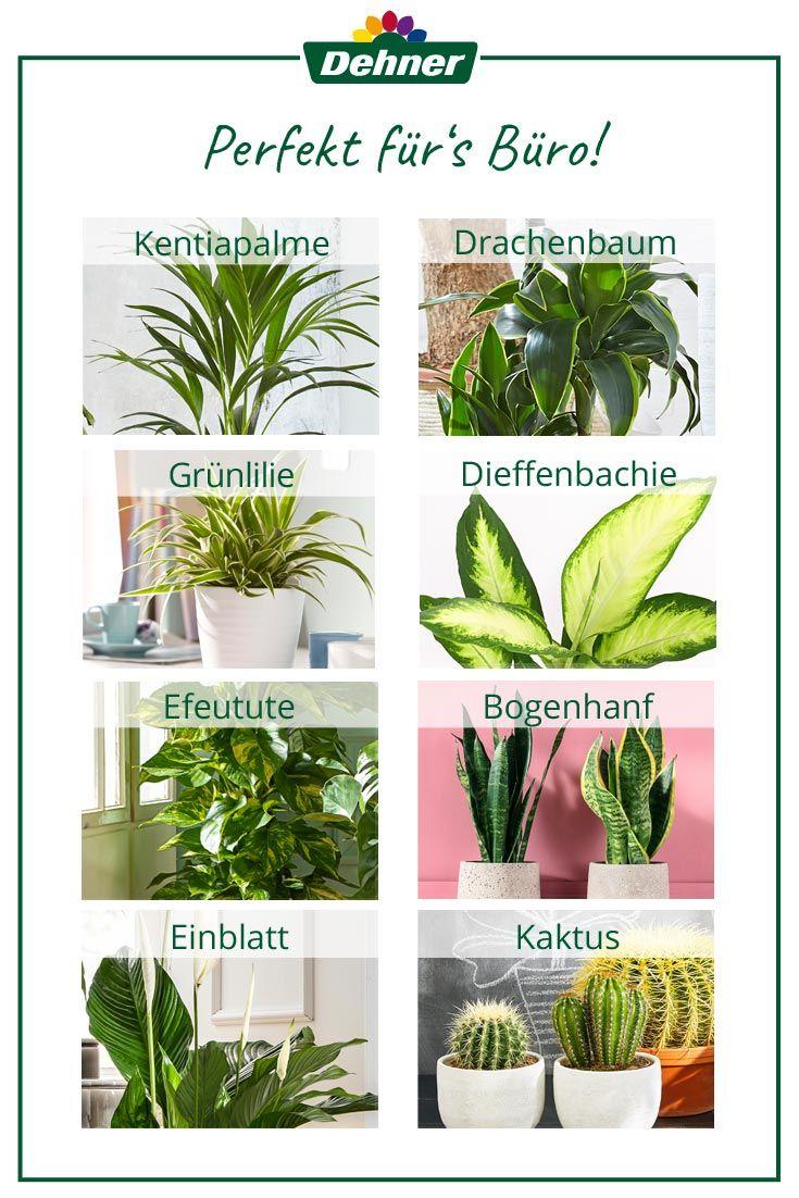 Die Perfekten Pflanzen Fur Dein Buro Zimmerpflanzen Pflanzen Blumen Pflanzen
