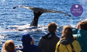 Whale Watching San Diego Coupon - Temecula Qponer ~ Blogs!