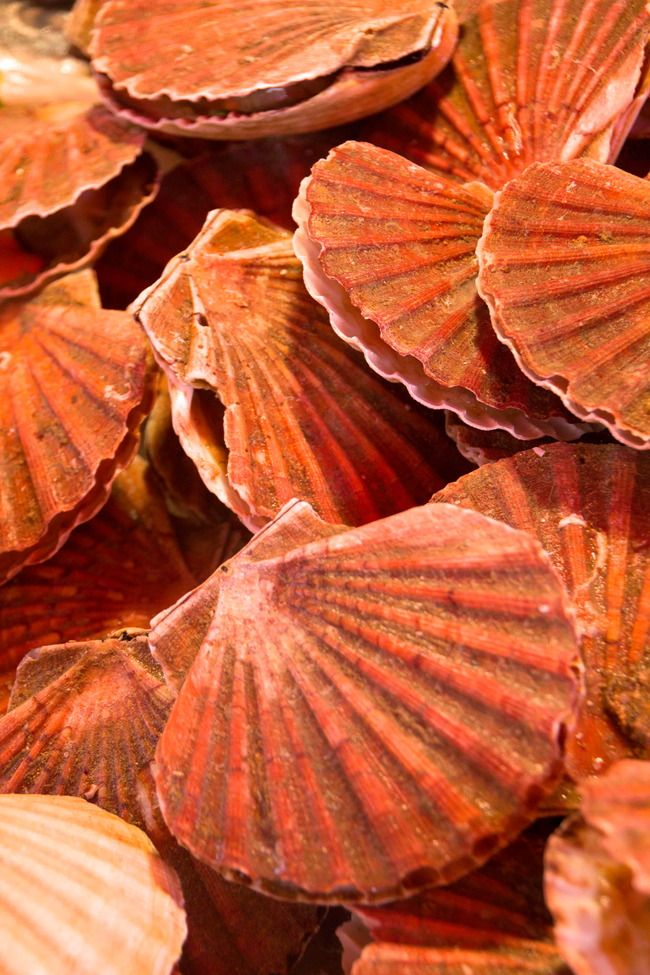 Scallops to Admire, Not to Eat #travel #Italy