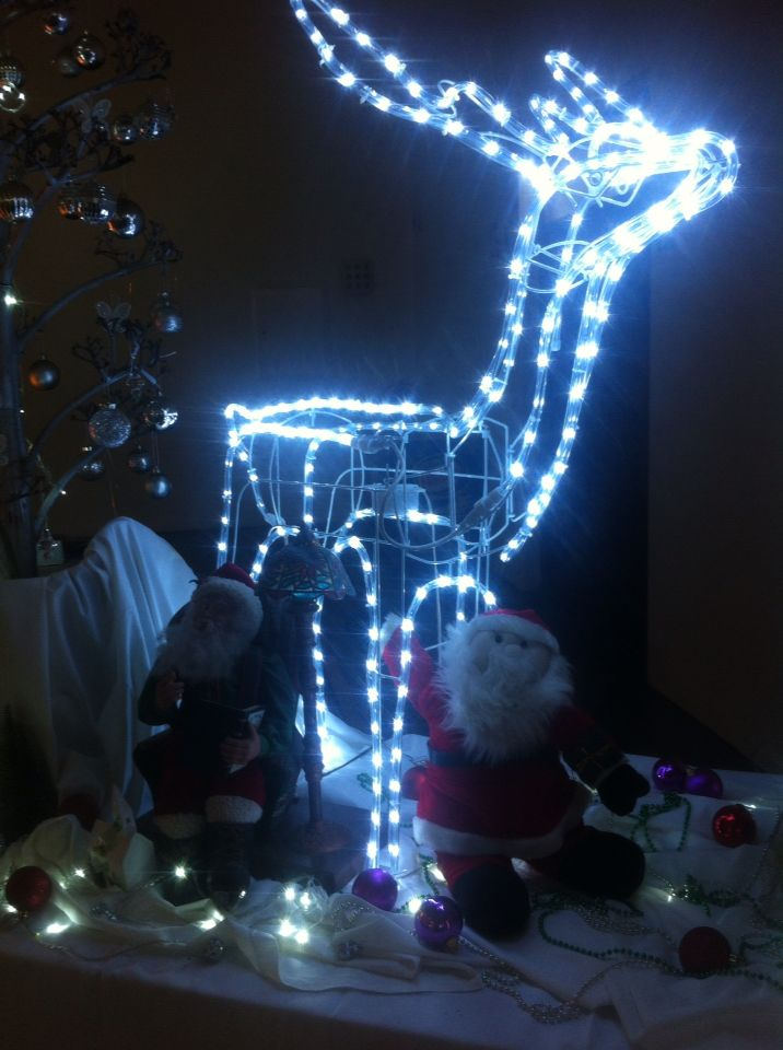 Reindeer display