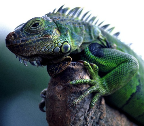 52 Best Images About Reptiles, Bitches! On Pinterest