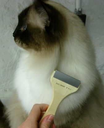 Cat Matted Fur: Tips and Tricks to Remove Cat Mats http://www.floppycats.com/cat-matted-fur-tips-and-tricks-to-remove-cat-mats.html