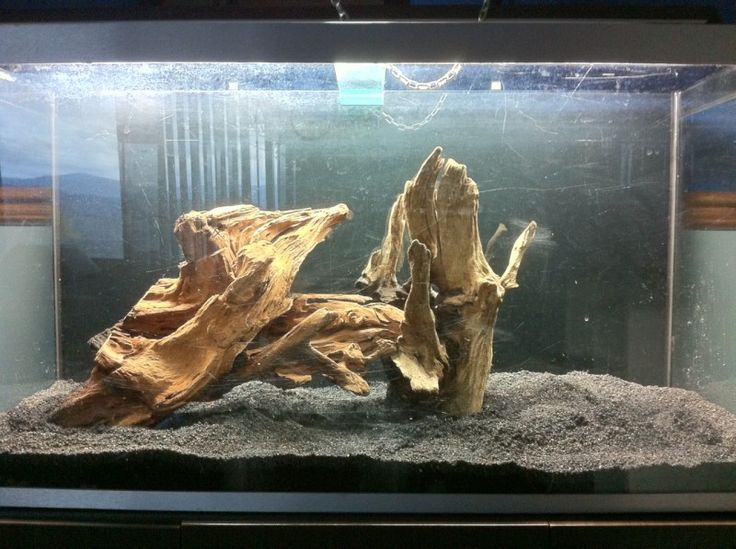 Driftwood set up aquarium ideas pinterest aquarium for Fish tank driftwood