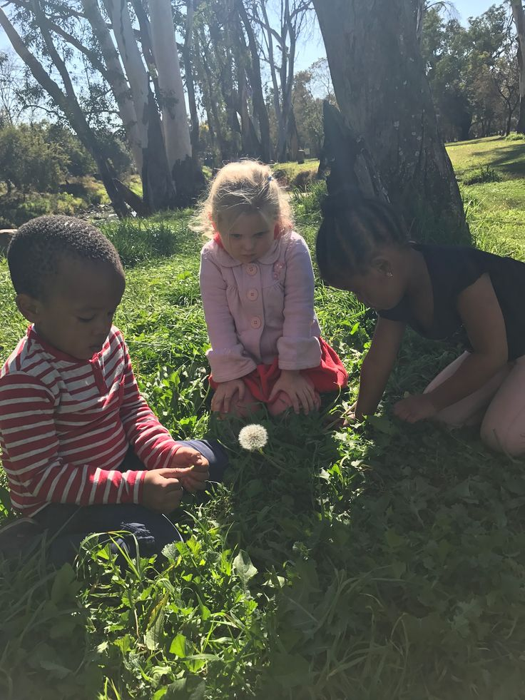 Wonders if nature in the field park gauteng , Sandton . Nature walk at preschool