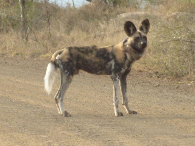 Hluhlue, South Africa
