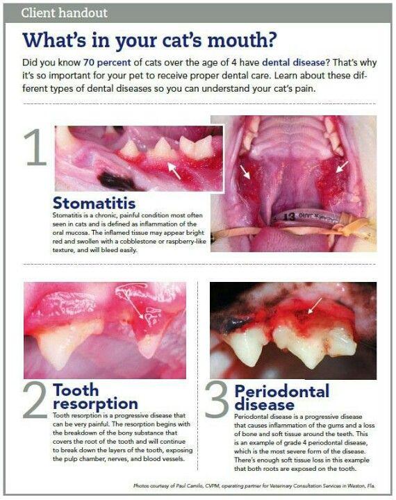 Cat dental problems #cat #health #dental