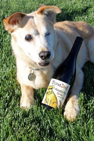 Cass Winery Dog Friendly