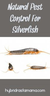 How to keep silverfish out of books