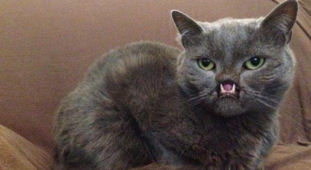 Lázaro, un gato con labio leporino, se vuelve popular en internet