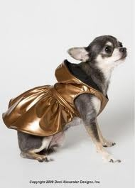 Copper Coat on a Chihuahua: Chihuahua Rules, Animal Kingdom, Bulldogs Female, Colors Copper 1, Chihuahua Clothing, Copper Coats, Copper Raindress, Copper Head, Animal Editing