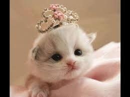 sevimli yavru kediler, ile ilgili görsel sonucu
