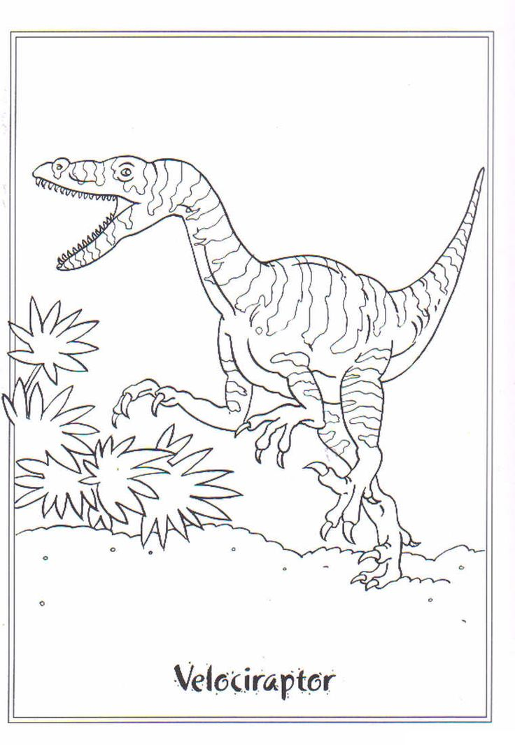 coloring page Dinosaurs 2 - Velociraptor
