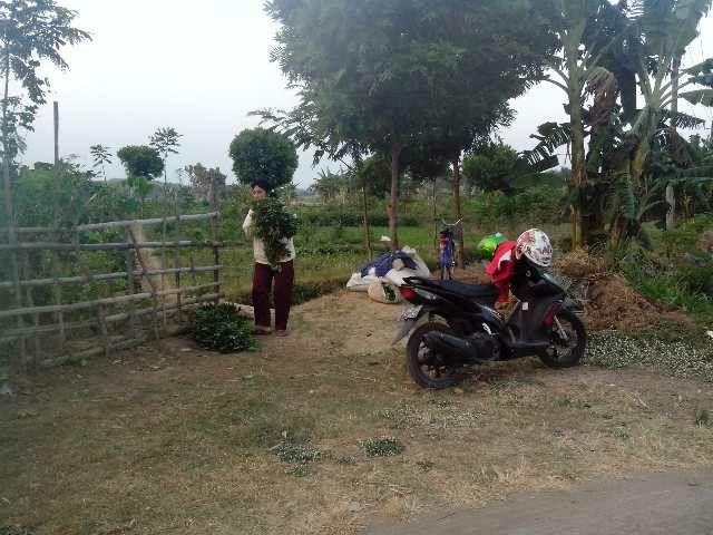 Desa Jawa Tengah Indonesia